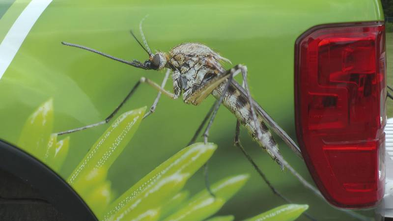 Recent heavy rains and humidity leads to a spike in pest mosquitoes