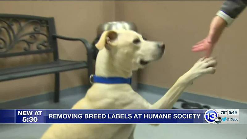 Experts say those breed labels are often incorrect
