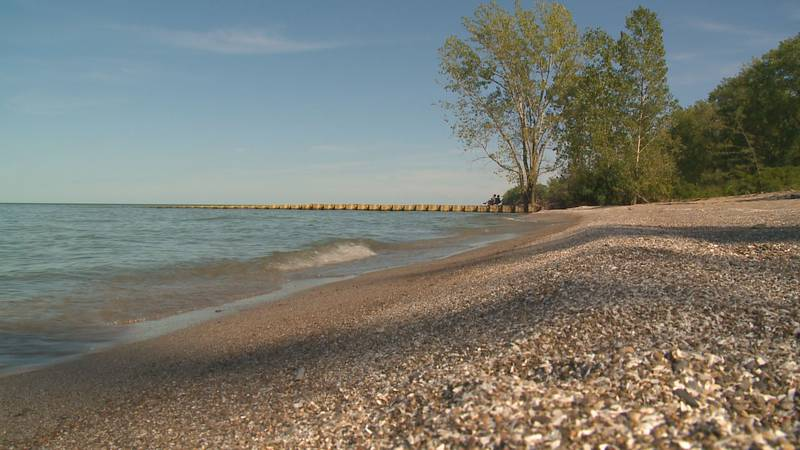 The yearly algal bloom in Lake Erie is smaller this year due to less rain in the months of...