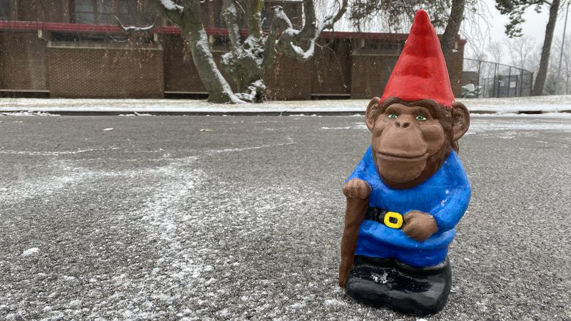 Since the height of the COVID-19 pandemic, dozens of garden gnomes are randomly appearing...