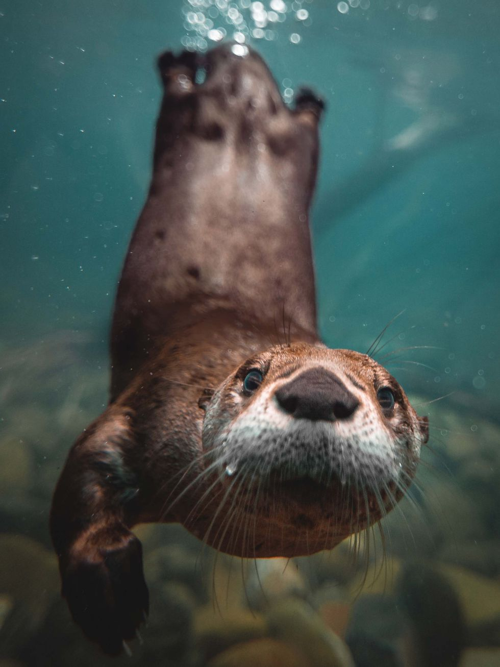 Toledo Zoo photographer Corey Wyckoff won a national award from the Association of Zoos and...
