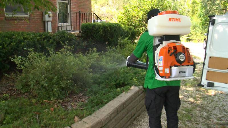Fighting mosquitoes after tropical heat