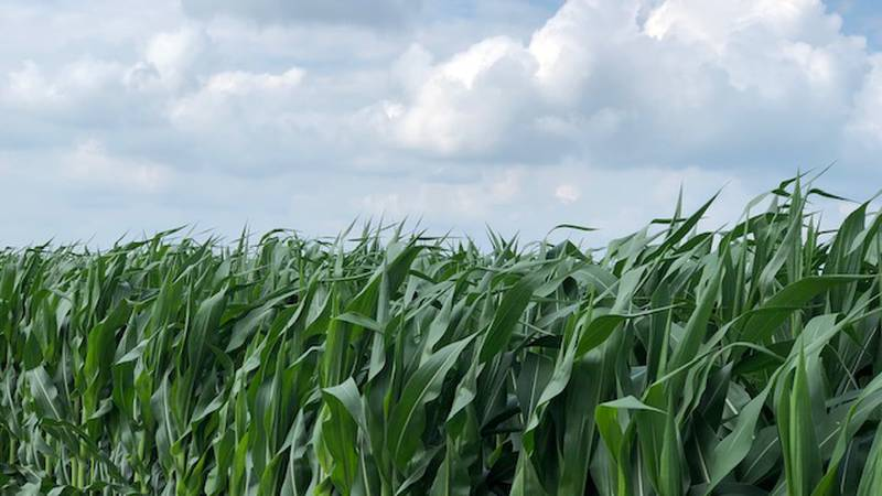 It is welcome news after the last several years of disappointing yields