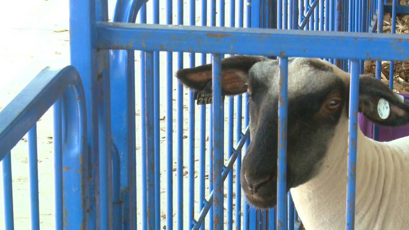 The heat and humidity have arrived just in time for the Lenawee County Fair. And keeping people...