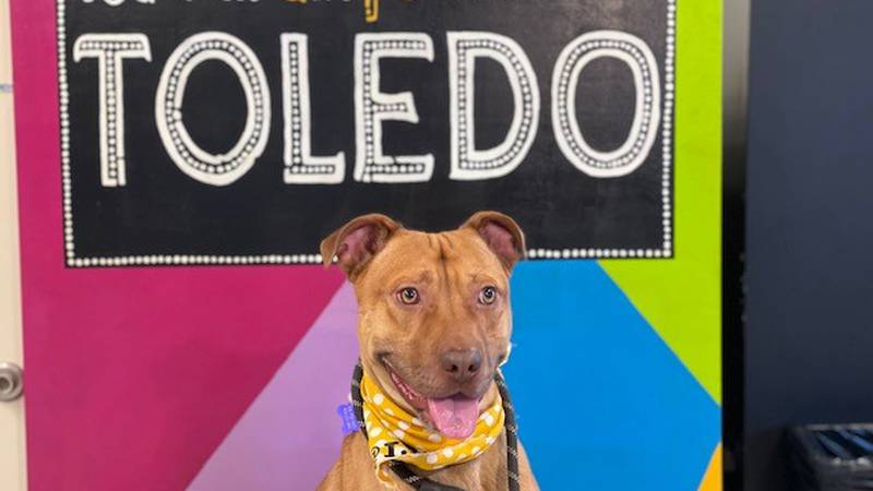 The program is for Pit Bull type dogs that are over 50 pounds and have been at the shelter for...