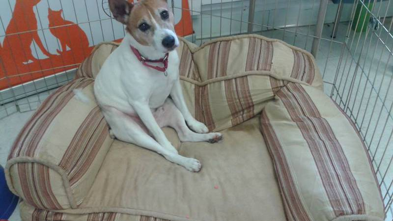 """UP FOR ADOPTION: A quick note from Sam: """"This sofa is very comfy, but I'd much prefer to lay on..."""