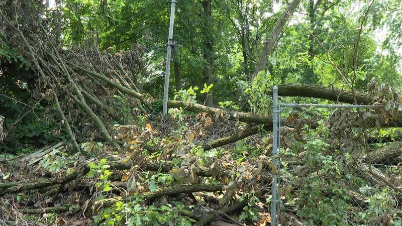 A Toledo family had been going back and forward with Toledo Edison over fallen tree debris in...