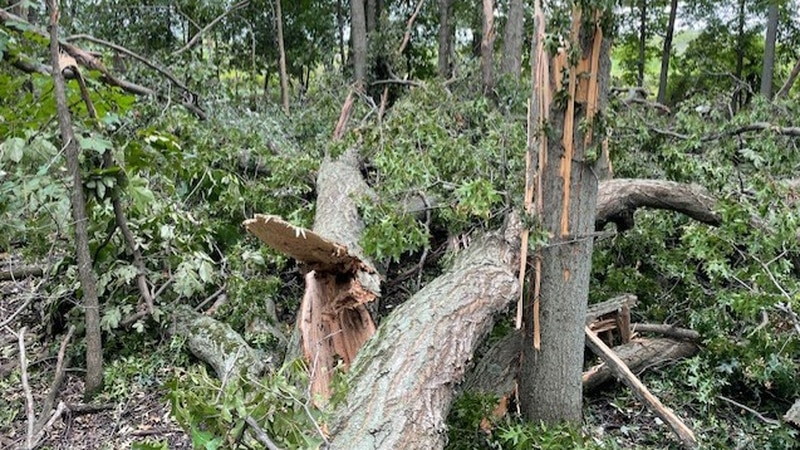 Six eagle nests were lost during an August storm in NW Ohio in 2021.