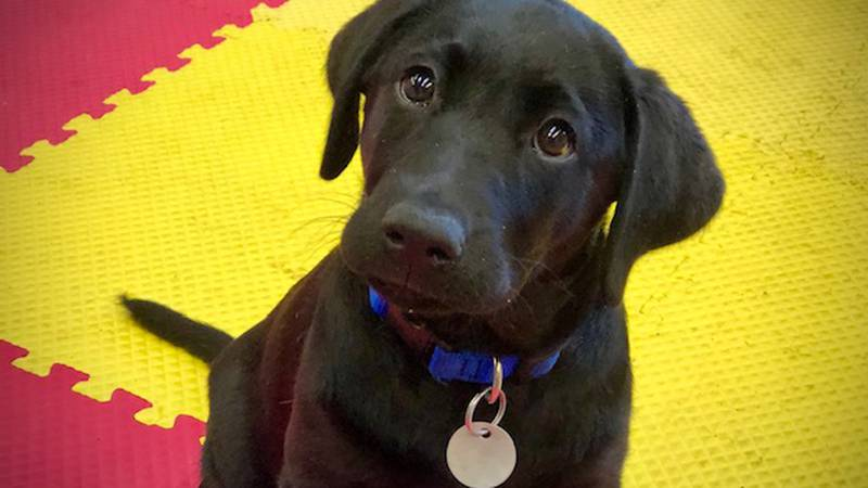 Volunteers are needed to serve as so-called puppy raisers and fosters.
