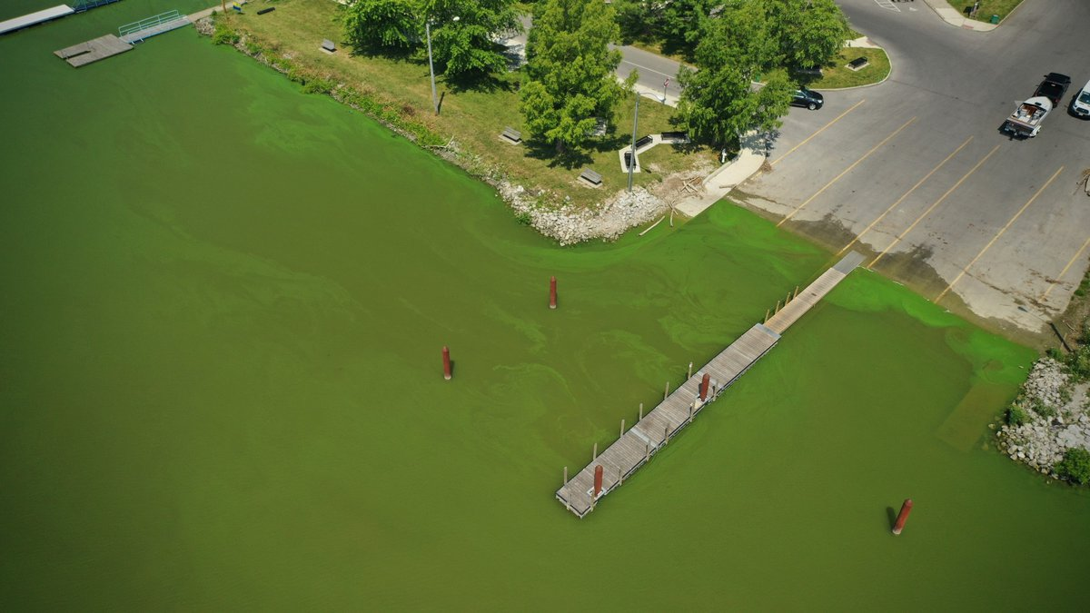 A view of algae in the Maumee River at Cullen Park in Toledo on Wednesday, July 8, 2020.