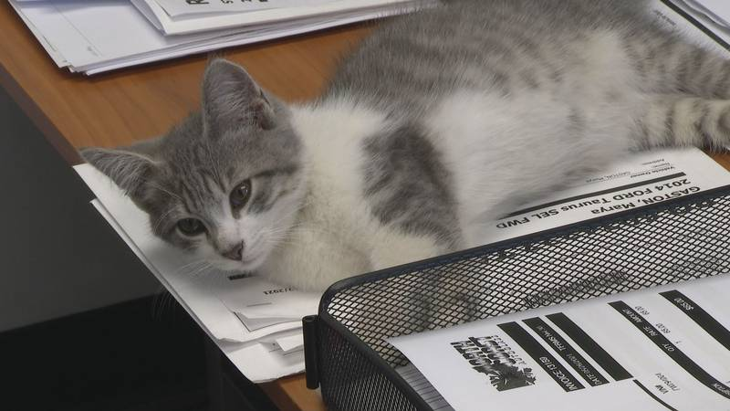Avis was adopted by the Firelands Collision Center staff, where he will live permanently in...