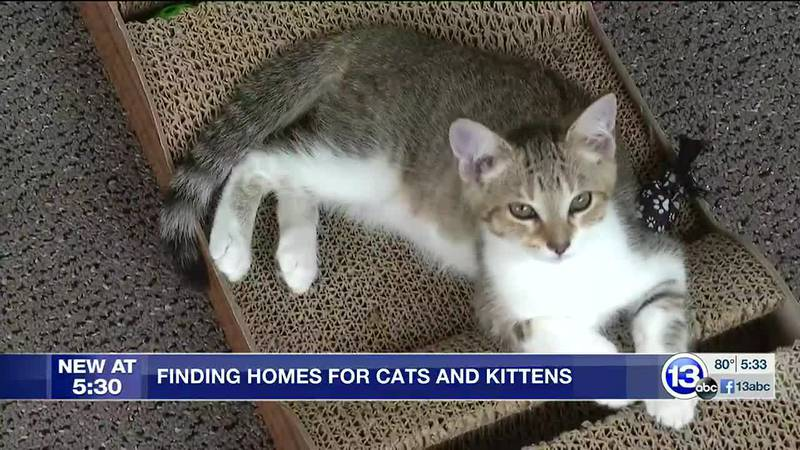 Little Mews Rescue is working hard to care for and find homes for cats and kittens, but the...
